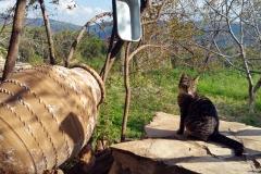 Birgi - Katze